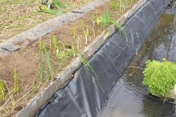 Voorbereiding rietveld - Proper afvalwater